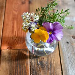 お花のある暮らし/ダイニングテーブルDIY/ガーデニング/雑貨/暮らし 庭で育てているお花たち。 花がらを摘んで…