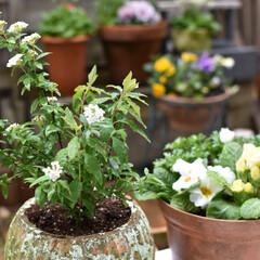 庭づくり/ガーデニング/DIY/雑貨/住まい 春のガーデニング☆ 寄せ植えのポイントは…