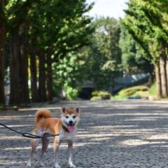 犬のいる生活/お出かけフォト/わんこ同好会/おでかけ お休みの日にわんことドライブに行ってきま…