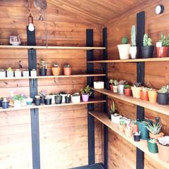 男前インテリア/ウォルナット/棚づくり/多肉小屋 多肉小屋の内部  棚をたくさん作ったので…