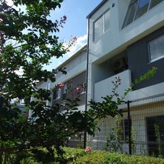 コーポラティブ住宅/設計 全国初の試みである、行政を地主とした一般…