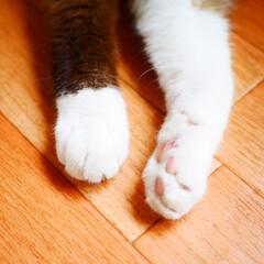 猫/ペット/ペットと暮らす/cat 実家の猫です。べべ女の子17歳です。 靴…