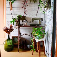 雑貨/玄関/ラブリコ/板壁/DIY/グリーンのある暮らし/... 玄関です。 ラブリコで原状回復できる板壁…