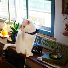 猫/ペット/ペットと暮らす/猫と暮らす/暮らし/住まい/... そんな狭いところに座らなくても~~(笑)…