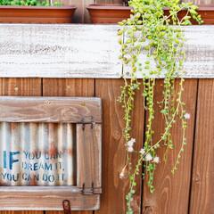 グリーンネックレス/多肉植物/庭/ジャンク/ジャンクガーデン/DIY うちの庭の萌えスポット。 たらりんと垂れ…