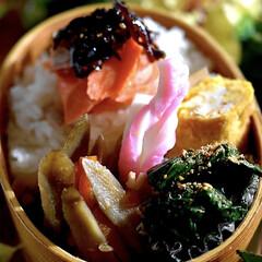 フォロー大歓迎/鮭弁/わっぱ弁/お弁当 おはようございます😊  今日から私はスタ…