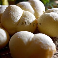 朝ゴパン/おうちパン/手作りパン/おしりぱん/白パン 昨日の夜は おしりぱん^ ^ 息子が柔ら…
