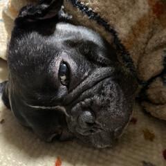 人間犬 うなぎ犬/人間寝/boss/愛犬/フォロー大歓迎 今日とても暑い 私でも暑くて半袖  でも…