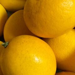 無農薬/収穫/レモン/フォロー大歓迎 皆様こんばんは^ ^  今日レモンの収穫…