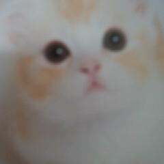 住まい 猫!!(1枚目)