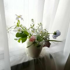 スミレ/チューリップ/リューココリーネ/風景/暮らし/フリチラリア/... 春、アップしようと思っていた写真です😅 …