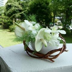 アンスリューム/デンファレ/アレンジ/夏の花 アンスリュームとデンファレ