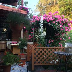 ガーデンルーム/ガーデンテラス ガーデンカフェ