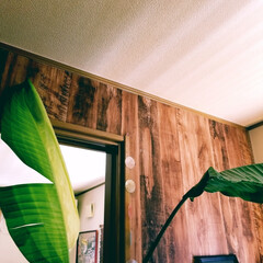 植物のある暮らし/植物のある生活/植物の不思議 リビングのグリーン🌱  新しい葉が何日も…