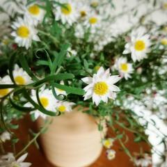 白いお花/可愛いお花/名前がわからない! おはようございます✨  お花に詳しい方。…