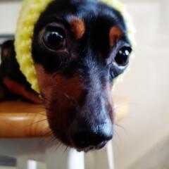 犬のいる生活/迷惑な犬/まんざらでもない犬/ペット 梨を包んでたフワフワで ちょっと遊んじゃ…