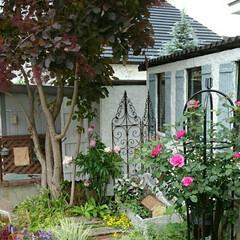 ガーデンシェッド/モルタル造形/スモークツリー/お庭改造/小さな庭/DIY