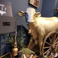 ステーキ/春のフォト投稿キャンペーン 昨日ステーキを食べに行ったら、金色の牛さ…