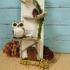フクロウ/キャンドルスタンド/流木/DIY/ダイソー 流木や松ぼっくり、ダイソー商品でスタンド…