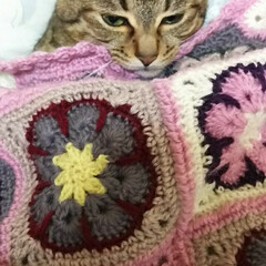 猫娘/ハンドメイド 姉が編んでくれたベットカバーに! 猫娘が…