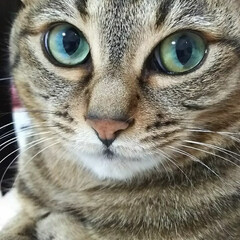 猫娘/猫の日 母ちゃん 今日はにゃんこの日だにゃん🐱 …