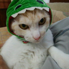 猫派/にゃんこ同好会 我が家の「ニャジラ」です🐾