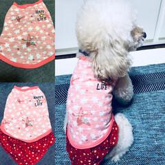 犬服/洋服/トイプードル/犬/ペット/ファッション/... プレゼントしてもらった ★ るーたんの服…