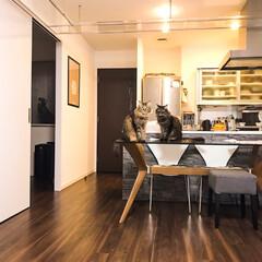 キッチン収納/ガラステーブル/ダイニング/キャットウォーク/キャットステップ/うちの子ワンショット/... 床、タイル張りにしたいなあ〜。 キッチン…