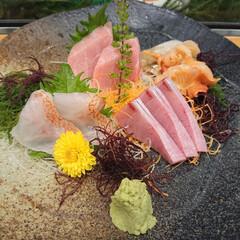 ナマコ酢/旬のお刺身/握り寿司/蛤の酒蒸し/たこの唐揚げ/煮あなご/... 久しぶりに娘と大好きなお寿司屋さんに! …