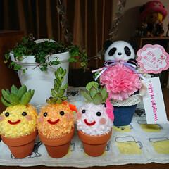 観葉植物のある暮らし/モスビー/母の日プレゼント 料理しながら見えるように配置しました!