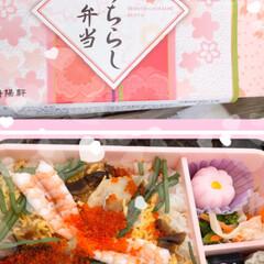 まりんぐるみ/まりん/お昼ご飯/川津桜🌸/三浦海岸桜祭り こんばんは。 昨日土曜日は三浦海岸の桜祭…(6枚目)