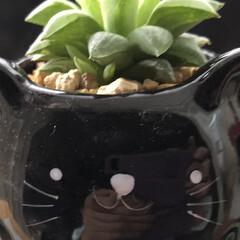 梅雨/キノコ/多肉植物/まりん/窓辺 おはようございます♬ とうとう7月に入っ…(4枚目)