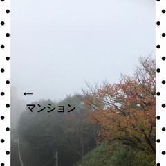 わんこ同好会/わんこ大好き/おやすみ🌙/1人遊び/まりん/霧 昨日は、ベランダに出たら霧がかかっていて…(1枚目)