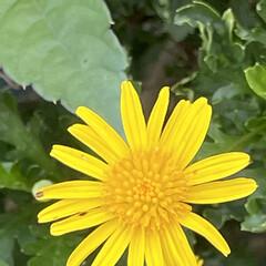 お花大好き/朝んぽ/まりん おはようございます♬ 梅雨明けから毎日暑…(4枚目)