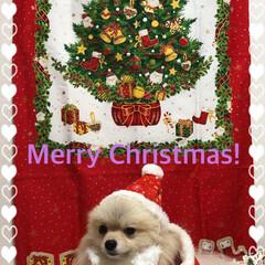 まりん/ケーキ🍰/クリスマスイブ/Merry  C hristmas!/クリスマス2019 Merry Christmas! 今日は…