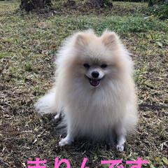 わんこ同好会/わんこ大好き/お花/富士山🗻/児童公園/お出かけ♪ おはようございます😊 昨日はまりんの尿検…