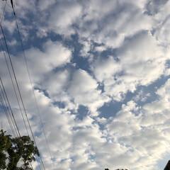 朝んぽ/まりん/今朝の空/フォロー大歓迎/LIMIAペット同好会/わんこ同好会/... 今朝の空です。 空と一緒にまりんを撮った…