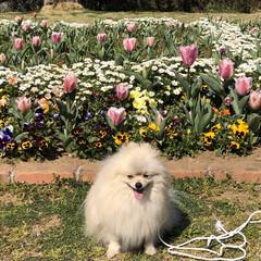 お花見🌸/3分咲き 昨日は、友達と一緒に久良岐公園までお花見…(3枚目)