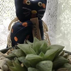 梅雨/キノコ/多肉植物/まりん/窓辺 おはようございます♬ とうとう7月に入っ…(6枚目)