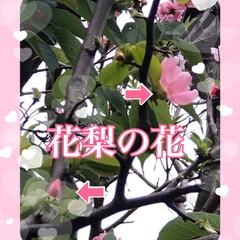 すずらん/クリスマスローズ/フリージア/花梨の花/関東地方雪の予報 暖かかったのにまた寒くなってきました。 …
