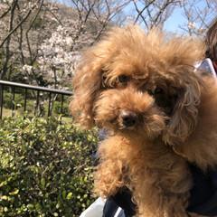 お花見🌸/3分咲き 昨日は、友達と一緒に久良岐公園までお花見…(4枚目)