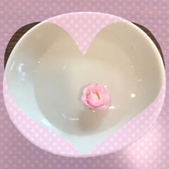 お皿に入れて/可愛い花🌸 どこから来たのか? 可愛いかったので、お…
