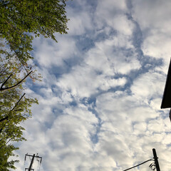 わんこ同好会/柿/ポメラニアン/月見草/ひまわり🌻/青空/... 昨日の朝んぽです。 空は青空も見えてまし…