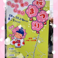 まりんぐるみ/まりん/お昼ご飯/川津桜🌸/三浦海岸桜祭り こんばんは。 昨日土曜日は三浦海岸の桜祭…