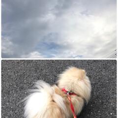 あ散歩/朝の空/LIMIAペット同好会/わんこ同好会/わたしのお気に入り 今日は雨が降る予報なので 今朝は早めのお…