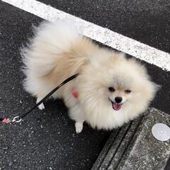 願い事/七夕/雲/クランベリー/あ散歩 おはようございます。 ☔️は止んでますが…