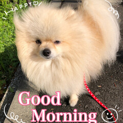 庭の花/今朝のまりん おはようございます♪ 今日は5月3日憲法…(1枚目)