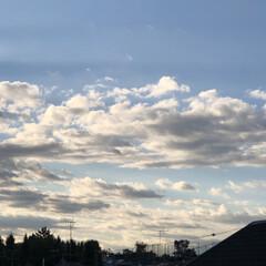 コキア/ハイビスカス🌺/あ散歩/まりん/お家園芸 おはようございます。 昨日のあ散歩です。…(2枚目)