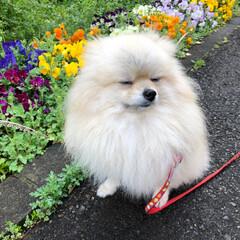 フォロー大歓迎/わたしのごはん/ペット/ペット仲間募集/犬/わんこ同好会/... 平成最期のあ散歩に行きました。 今日はた…