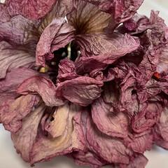お花/まりん/秋の味覚/9月/ベランダ/多肉植物/... おはようございます♬ 今日はもう9月2日…(5枚目)